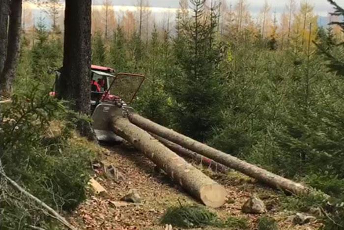 Holzernte im Winter 2018